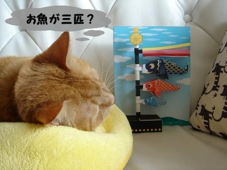 屋根よりラ~ラ~ラ鯉のぉ~ぼぉ~りぃ♪ (5)