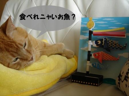 屋根よりラ~ラ~ラ鯉のぉ~ぼぉ~りぃ♪ (6)