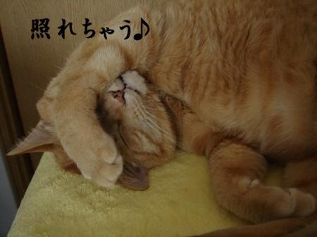 正しい寝方。 (4)