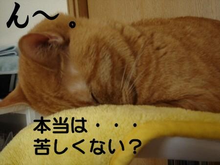 正しい寝方。 (7)