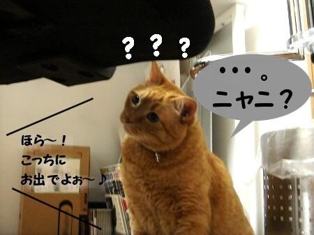 ハテナ? (2)