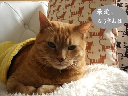 猫ロール (1)