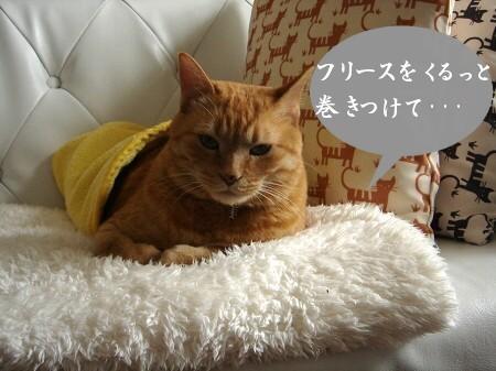 猫ロール (2)