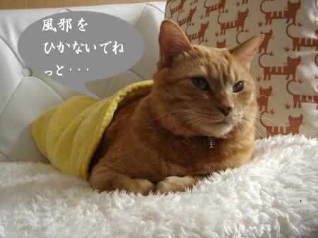 猫ロール (3)