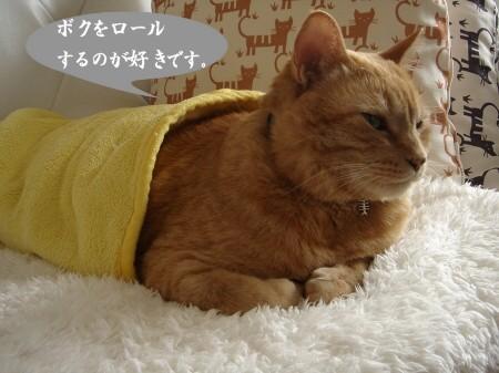 猫ロール (4)