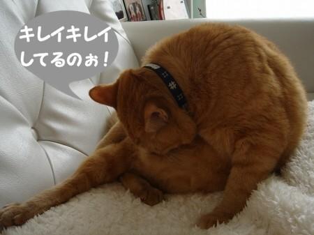 上達しない毛繕い (1)