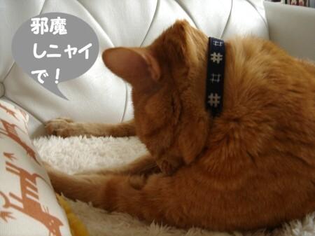 上達しない毛繕い (2)