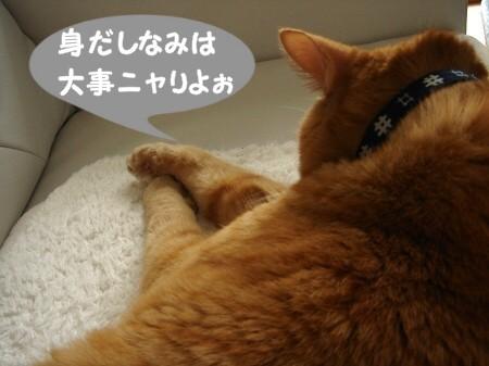 上達しない毛繕い (3)