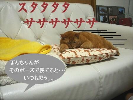 1・2・3・ぽんた!! (1)