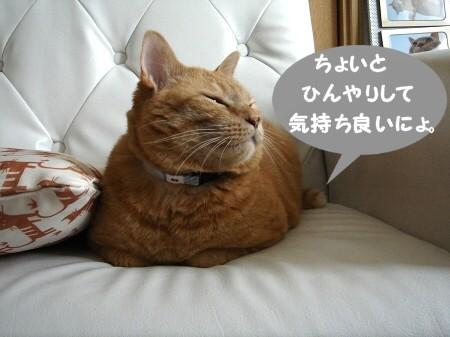 1・2・3・ぽんた!! (6)
