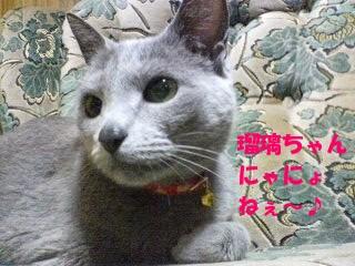 瑠璃ちゃんにゃにょねぇ~♪ (3)