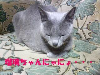 瑠璃ちゃんにゃにょねぇ~♪ (4)