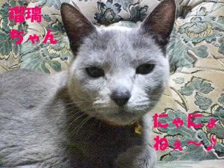 瑠璃ちゃんにゃにょねぇ~♪ (5)