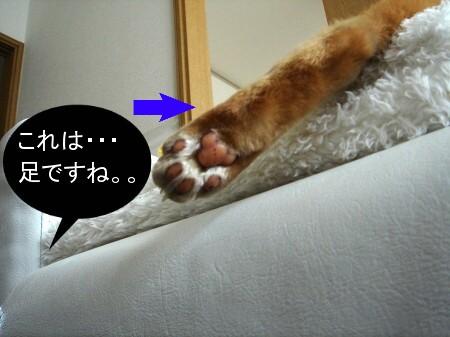 これな~んだ!? (1)