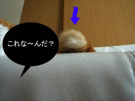 これな~んだ!? (2)