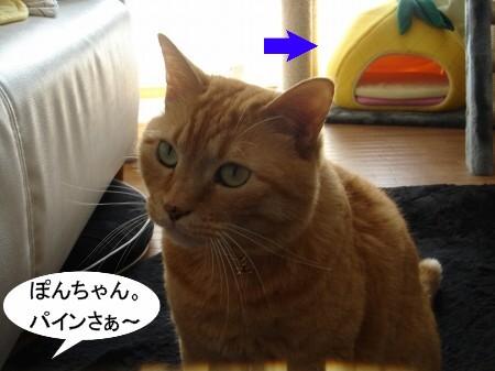 パインとお別れ (1)