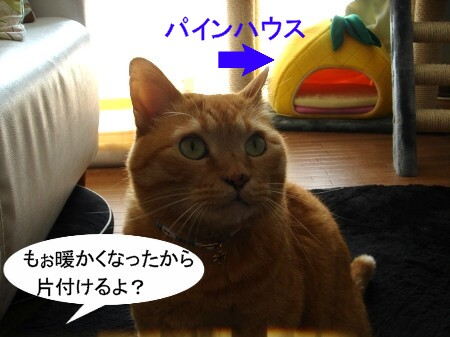 パインとお別れ (2)