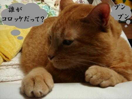 コロッケふたつ (2)