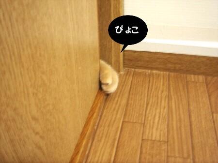 戸の向こうから・・・ (1)