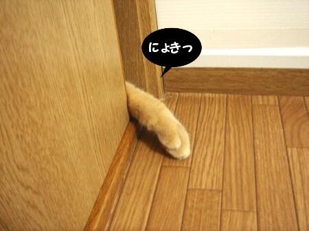 戸の向こうから・・・ (2)