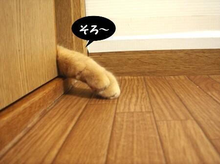 戸の向こうから・・・ (3)