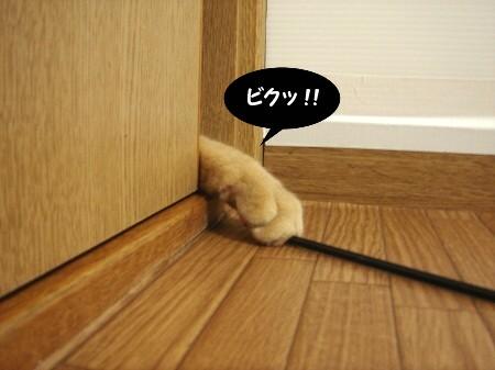 戸の向こうから・・・ (4)