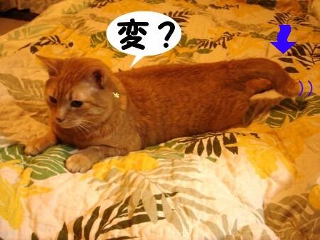 への字しっぽ♪ (2)