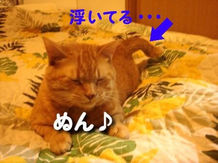 への字しっぽ♪ (3)