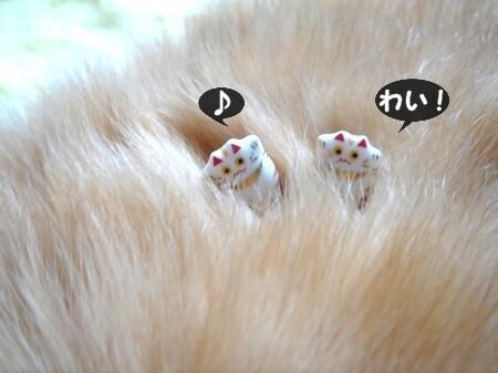 豆猫で遊ぶ。 (3)