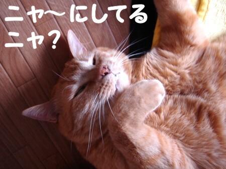 豆猫で遊 ぶ。 (4)