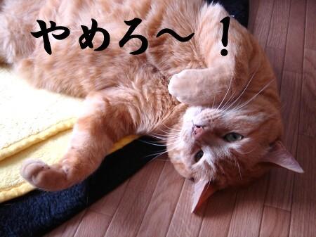 豆猫で遊ぶ。