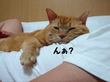 お腹の上にのせてぇ (2)