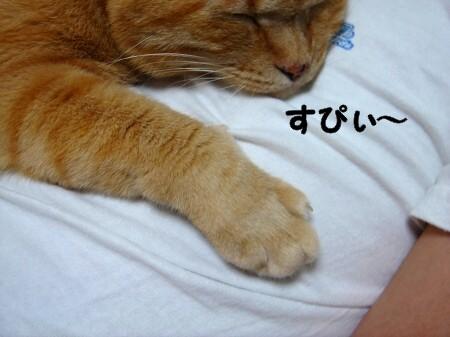 お腹の上にのせてぇ (3)