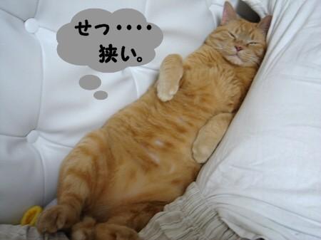 お腹の上にのせてぇ (5)