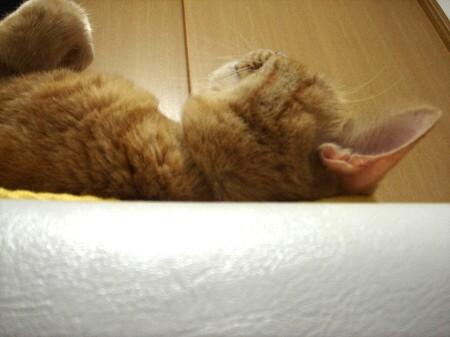 愉快な寝相 (4)