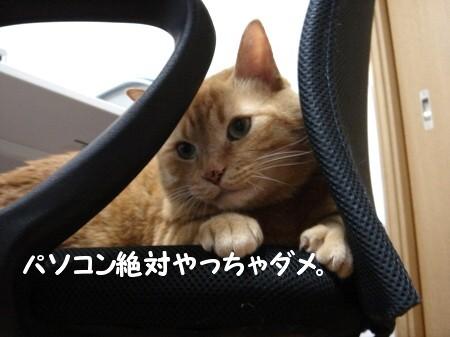 ちょこんとお手手が大好き♪ (2)