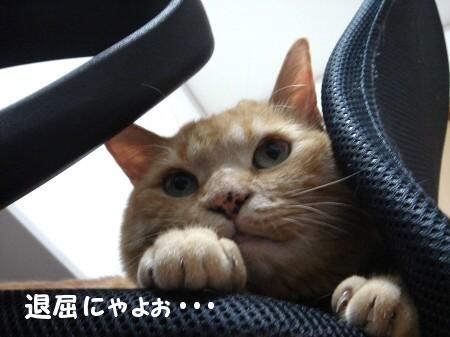 ちょこんとお手手が大好き♪ (4)