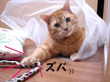 白い袋も楽しいな? (4)