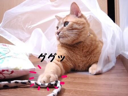 白い袋も楽しいな? (5)