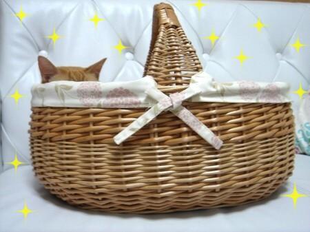 憧れのカゴ猫♪ (1)