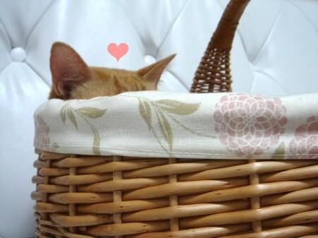 憧れのカゴ猫♪ (2)