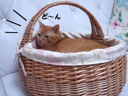憧れのカゴ猫♪ (3)