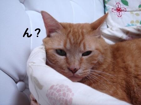 憧れのカゴ猫♪ (4)