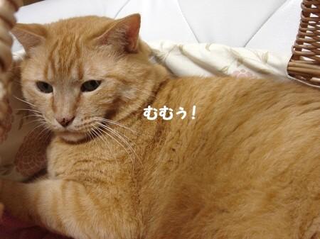 憧れのカゴ猫♪ (5)