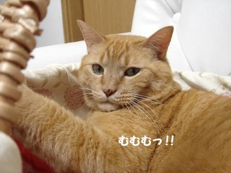 憧れのカゴ猫♪ (6)