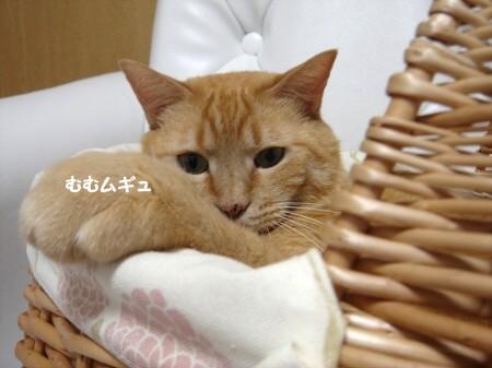 憧れのカゴ猫♪ (7)