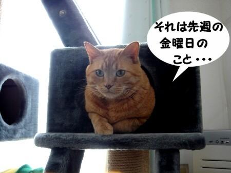 そりゃ~ひどい話だよね~☆ (1)