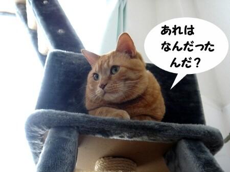 そりゃ~ひどい話だよね~☆ (2)