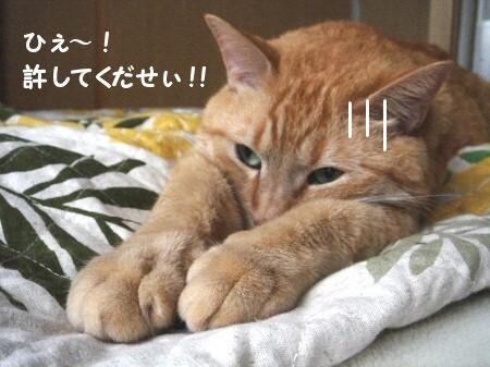 猫がそれして何が悪い? (1)
