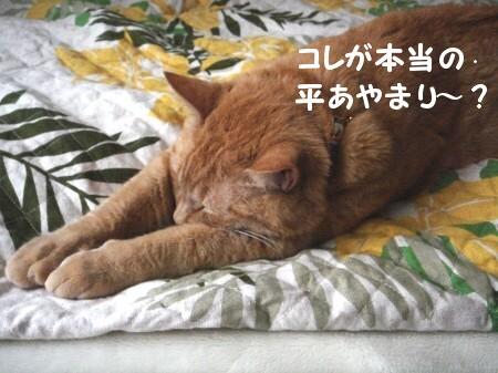猫がそれして何が悪い? (3)